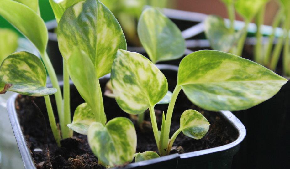 Zimmerpflanzen vermehren viele kleine dinge