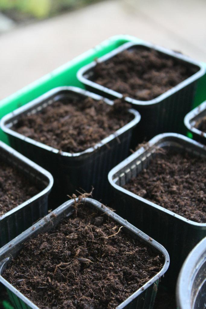 Abeleger Efeutute einpflanzen viele kleine dinge